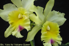 Blc Yuko Ito Volcano Queen by Ted Moore