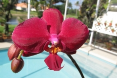 Phal Brother Pungoteague Creek by Marilyn Moser