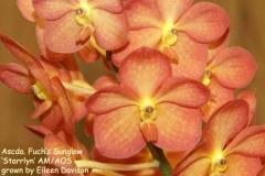 Ascda Fuchs Sunglow Starrlynamaos by Eileen Davison
